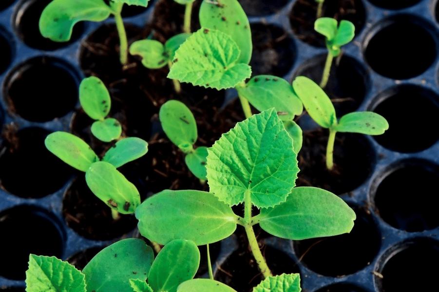 Grow_your_own_veggie_kits