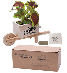 Forget Me Not Wooden Cube Blossom Kits